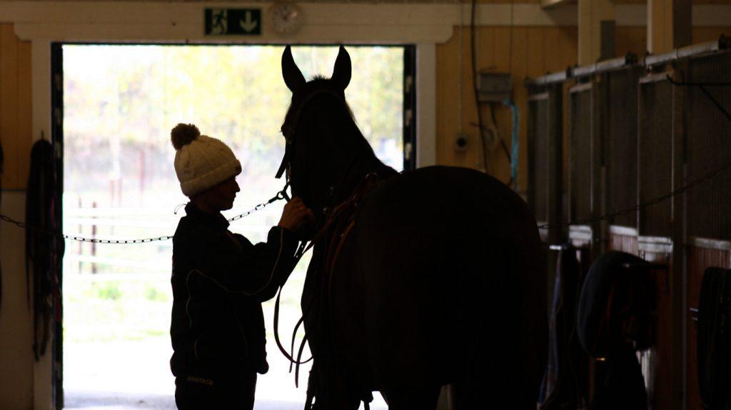 Påseling av hest