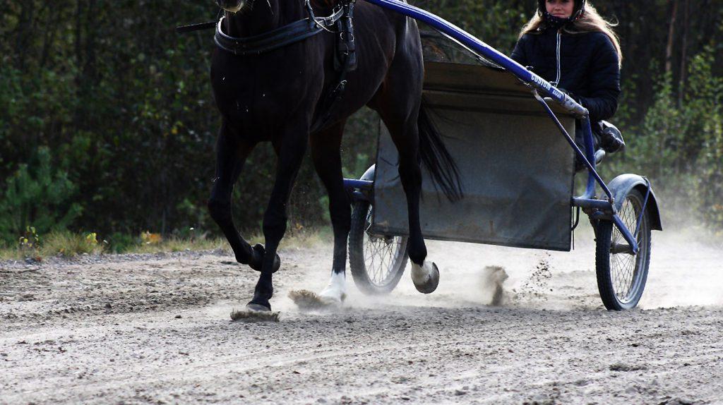 Nærbilde av hest i treningsløype