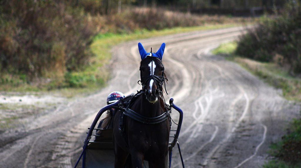 Hest i treninsløype