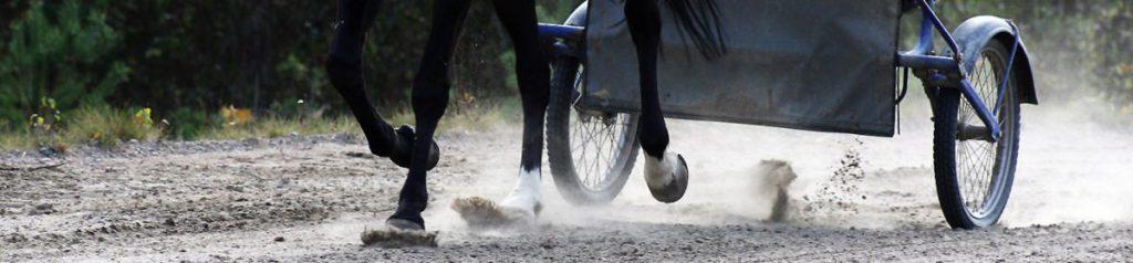 Hest i treningsløype