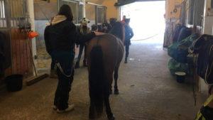 Ponnilisenskurs: Deltageren hadde ikke med ponnier denne gang, men fikk blant annet lære litt om anatomi på en av ponniene ved NTS.