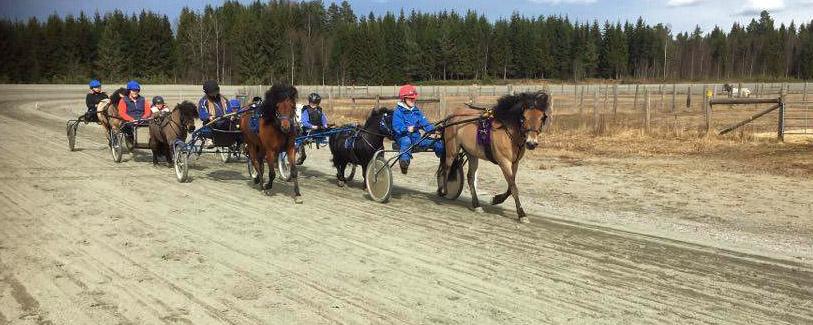 PONNILISENSKURS: Kusker og ponnier er ute i banen og trener